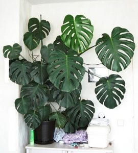 interiorarteblog - monstera