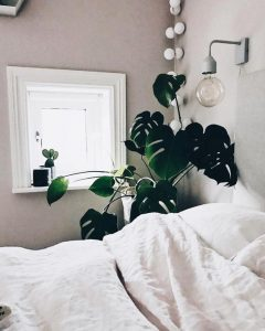 interiorarteblog - monstera habitación